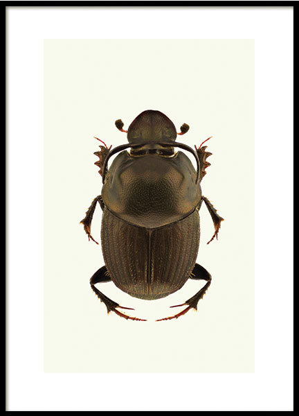 BROWN BEETLE, POSTER