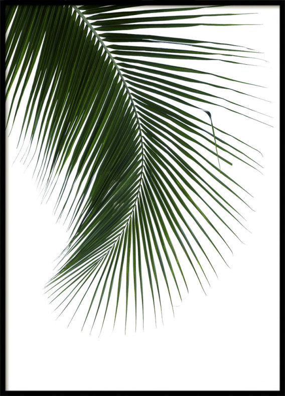 Palm Blad, Poster